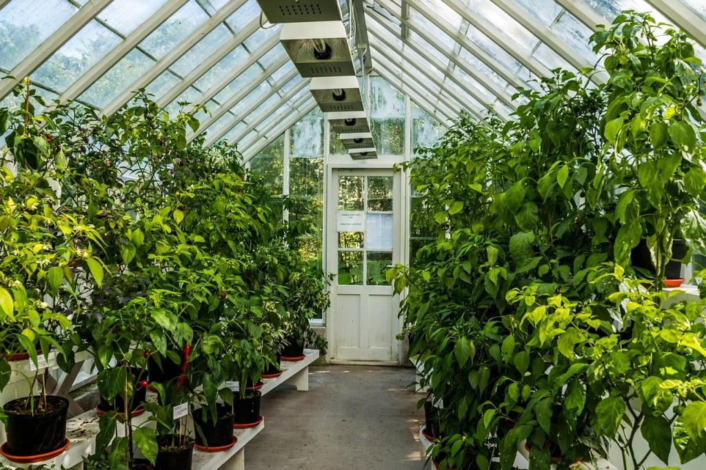 greenhouse-454510_1280